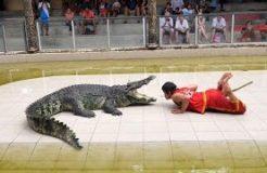 Thailand Crocodile Farm - The most DANGEROUS job in the world?