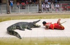 Thailand Crocodile Farm - The most DANGEROUS job in the world?