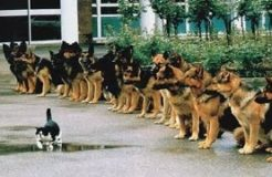 Best Trained & Disciplined Dogs #2