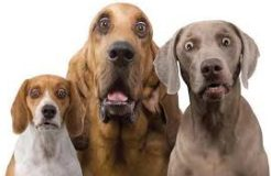 Can dogs count, do mathematics?