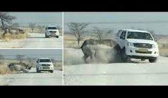 Rhino smashing into tourists